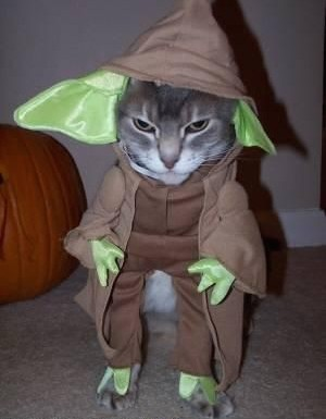 """""""When you look at the dark side, careful you must be. For the dark side looks back.""""  -Yoda Cat"""