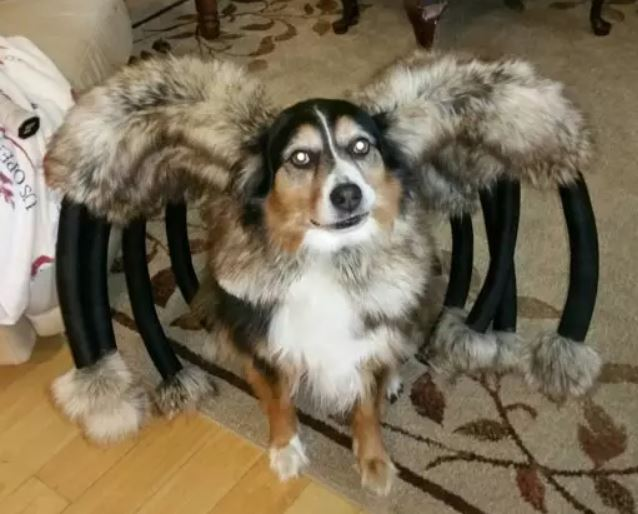 A dog with 10 legs! Eek!!