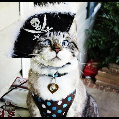 """""""Yarrrr matey gimme alla yer treatty or I'll be a throwin' ya o'erboar!"""" -Cattain Jack Sparrow"""
