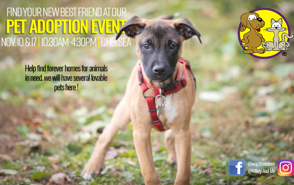 Wags to Wiskers Dog Adoption Event