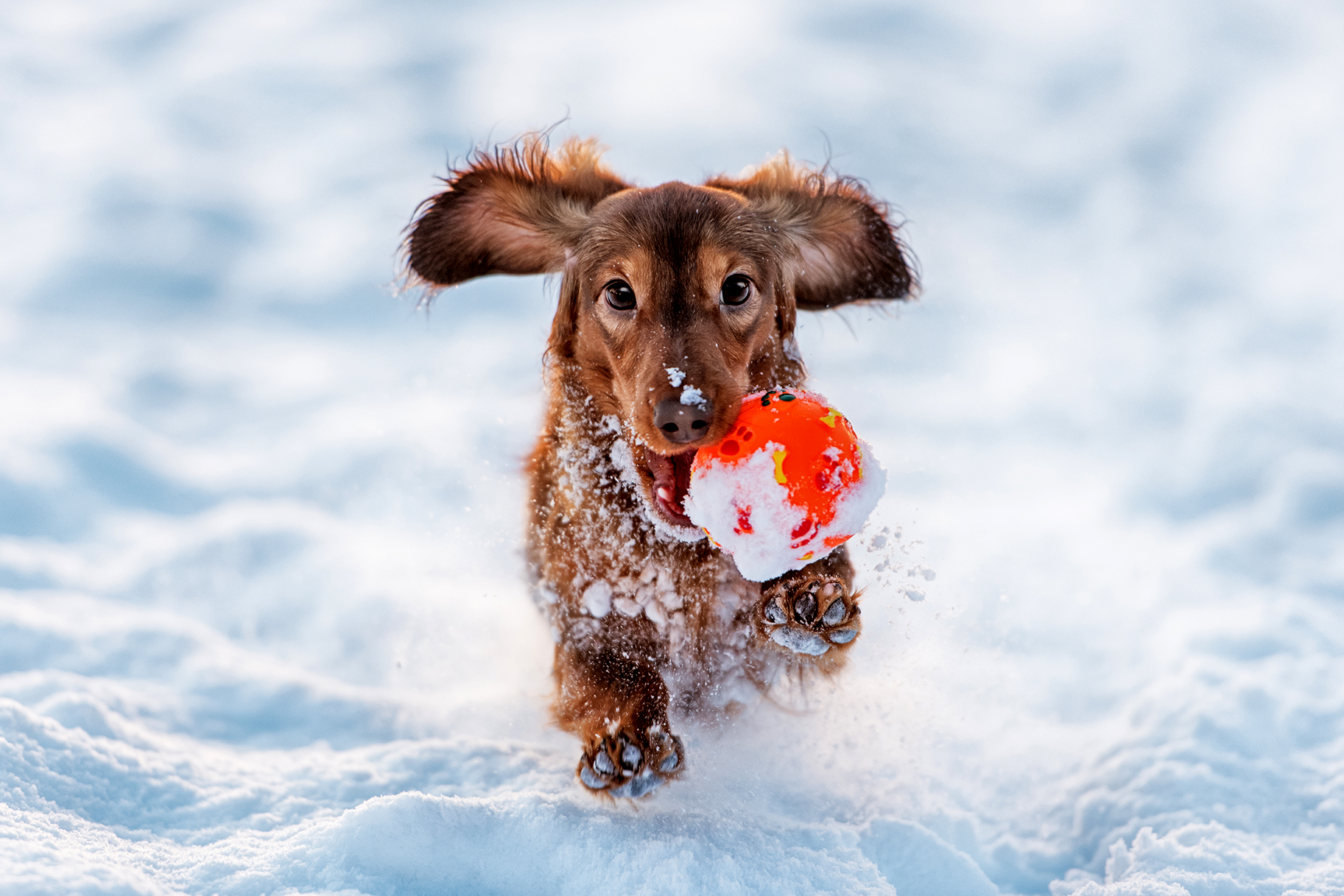 Wags to Wiskers 10 Tips for Winter Canine Care