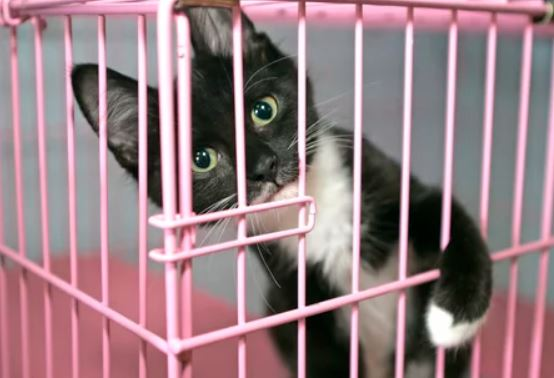 Wags to Wiskers 10 Reasons to Adopt a Cat