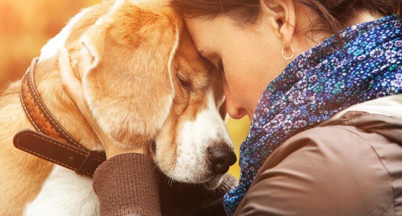 Wags to Wiskers Pet Grieving