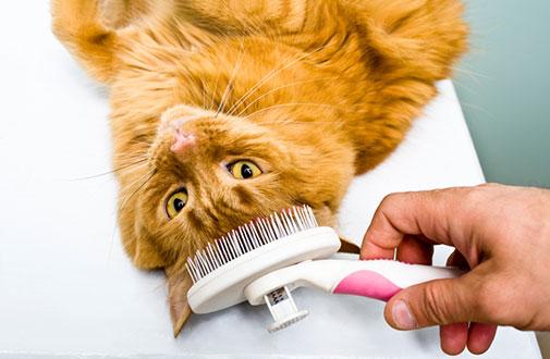 cat grooming.jpg