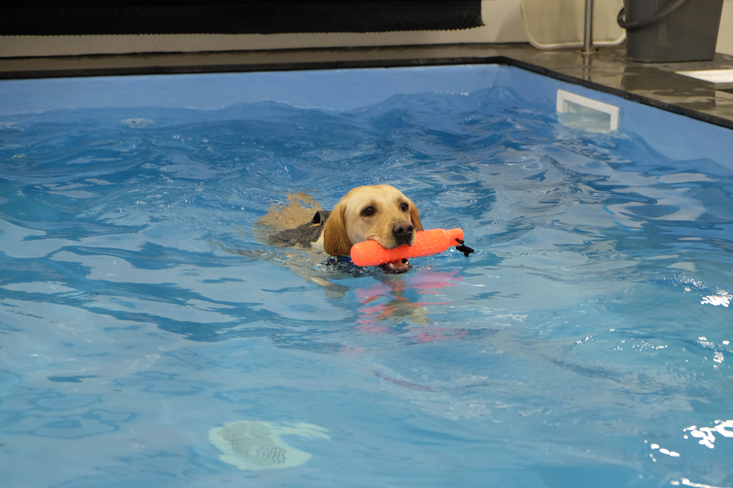 Dog hydrotherapy