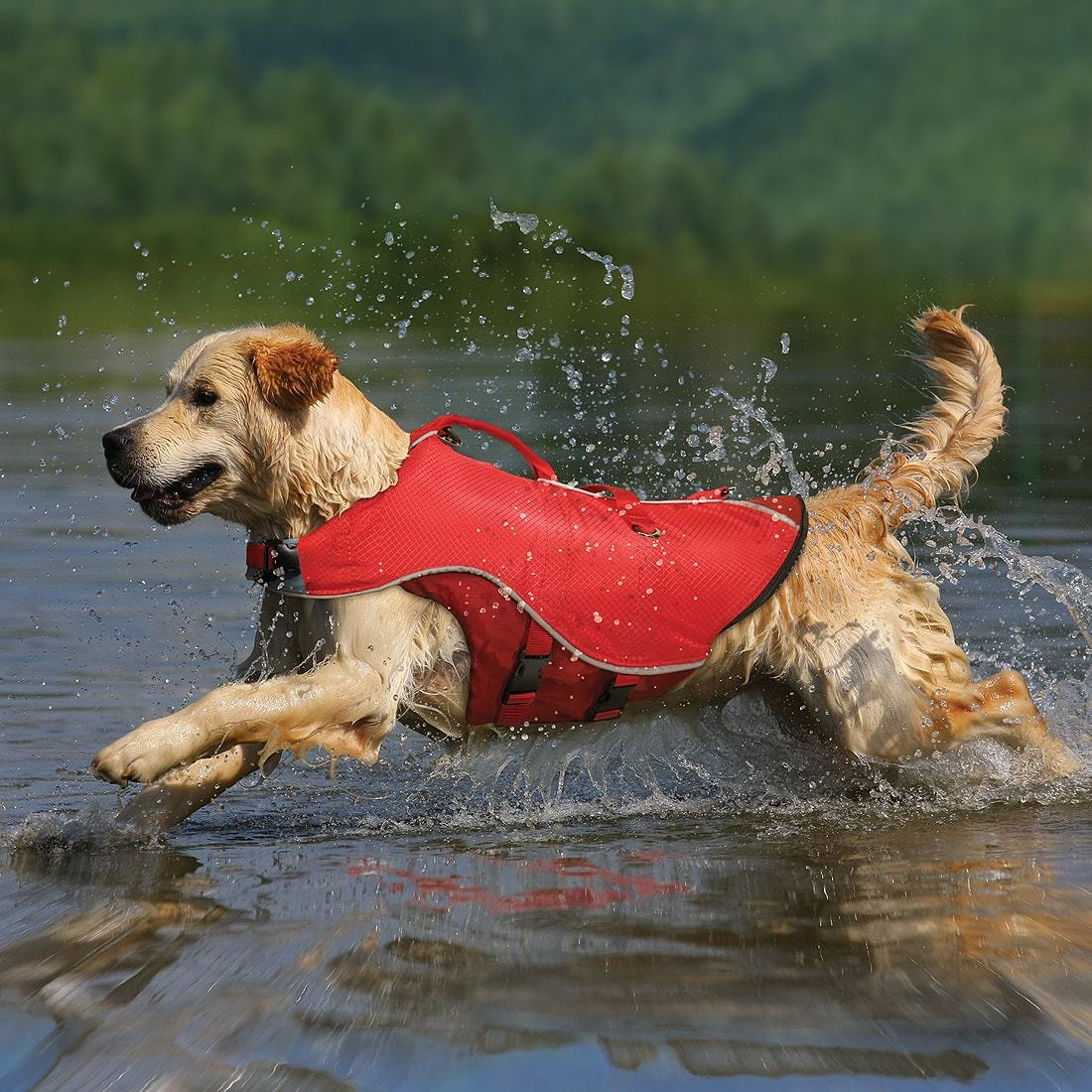 dog life vest.jpg