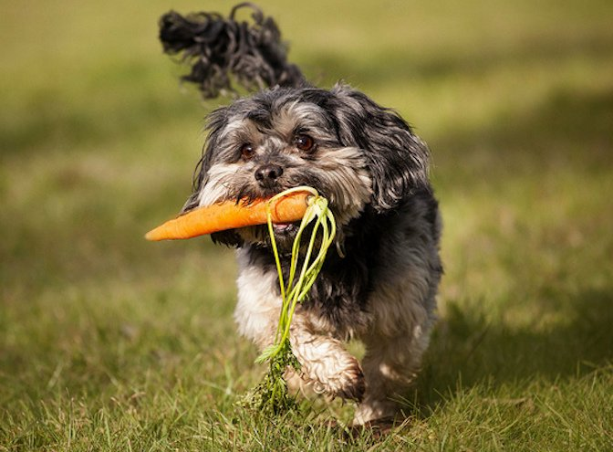 dog-with-carrot.jpg