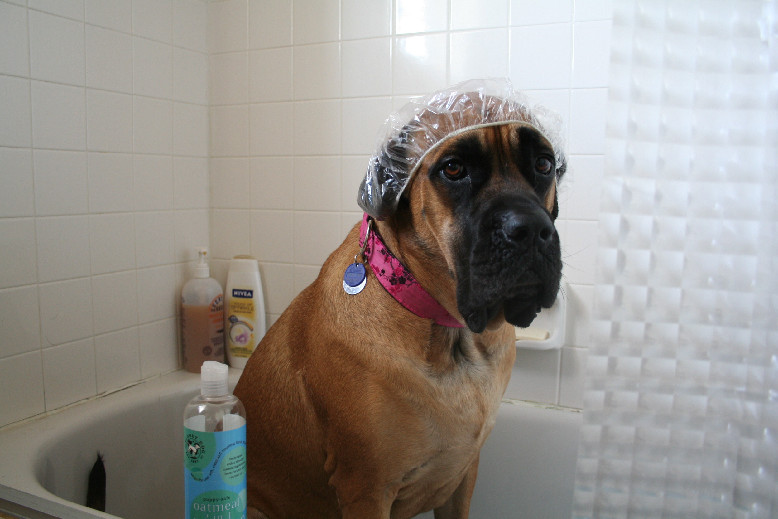 dog in shower wags to wiskers.jpg