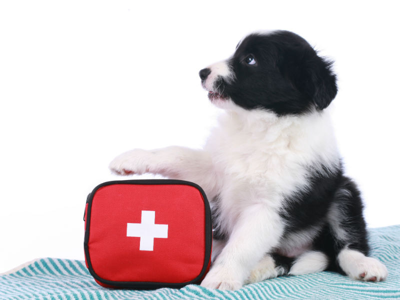 Find our PUPDATE on 6 pet first aid kit essentials HERE.