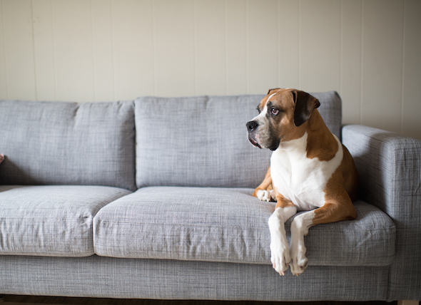 dog on couch.jpg