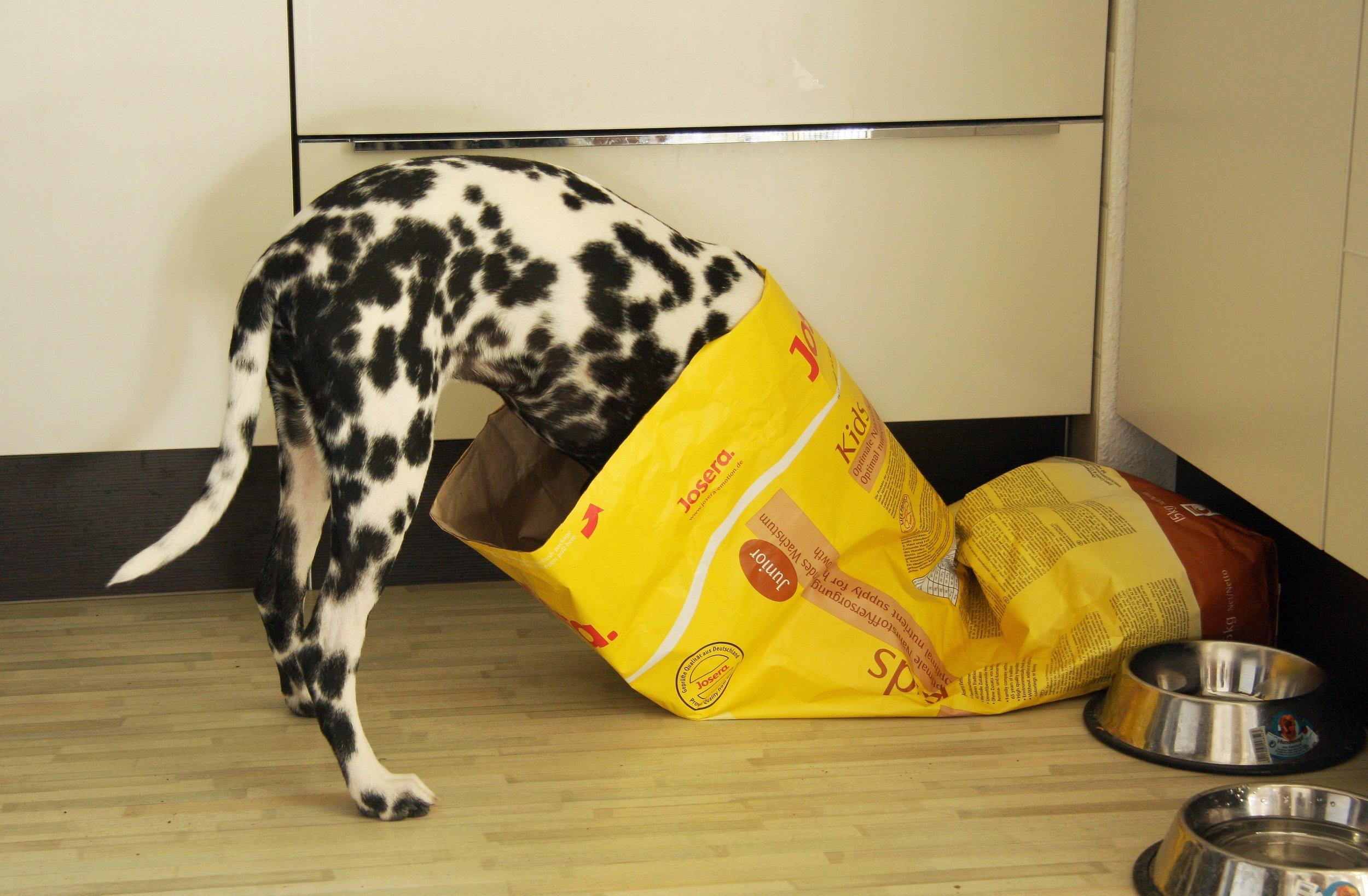 dog head in food.jpg