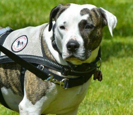 service dog 8.jpg