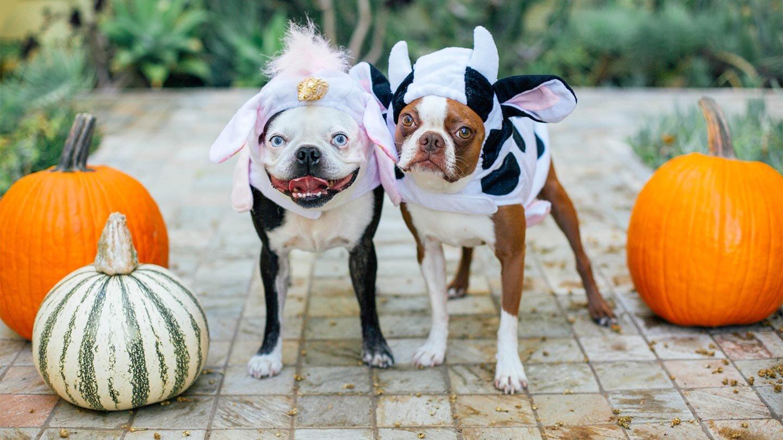 Halloween-Hazards-How-to-Keep-Your-Pet-Safe-1440x810.jpg