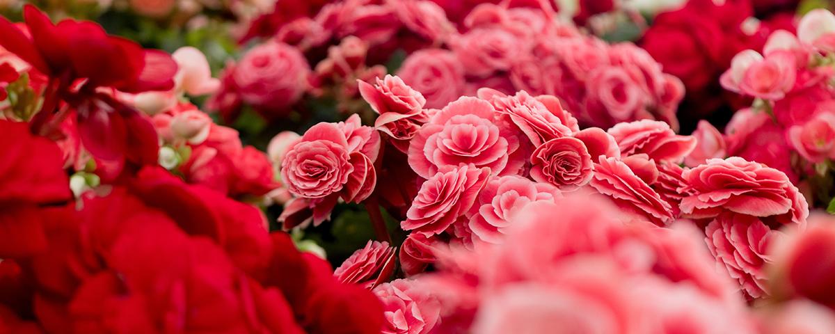 FlowersDepartment.jpg