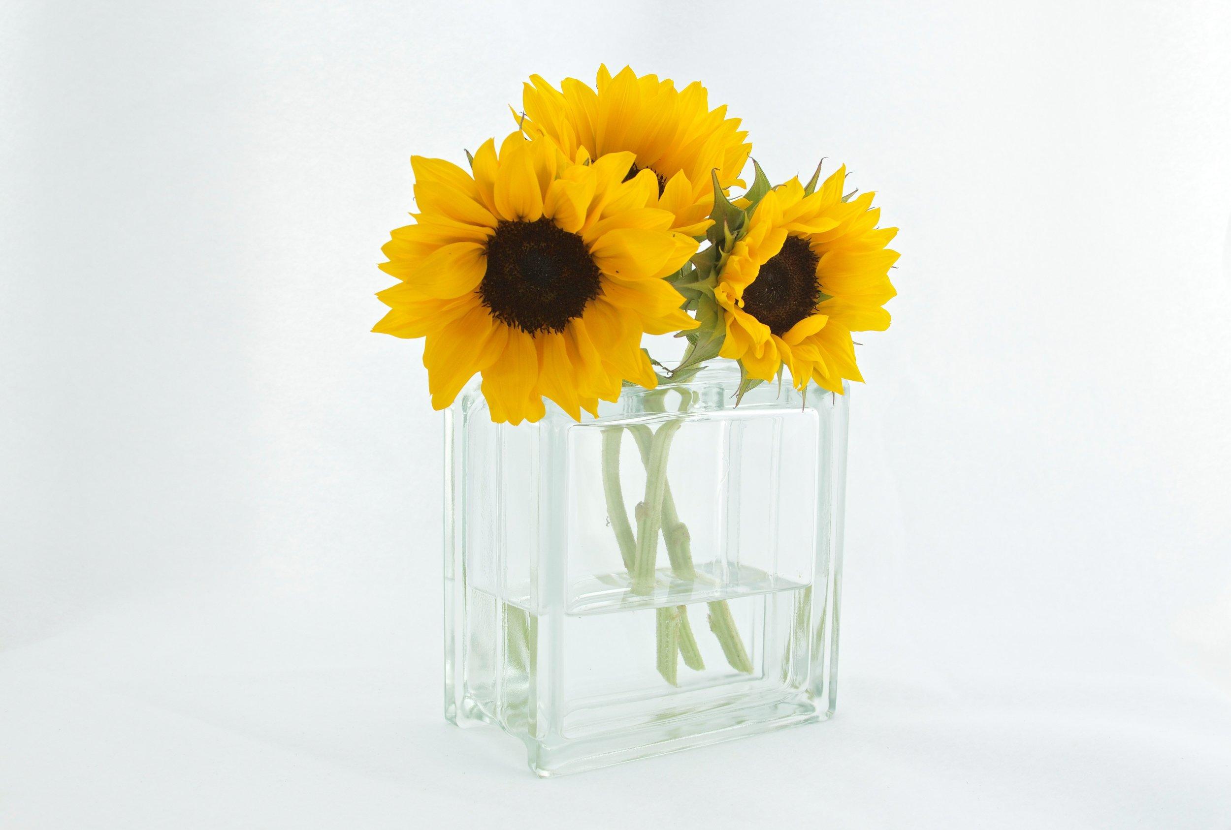 flowers-sunflowers-vase-12581.jpg