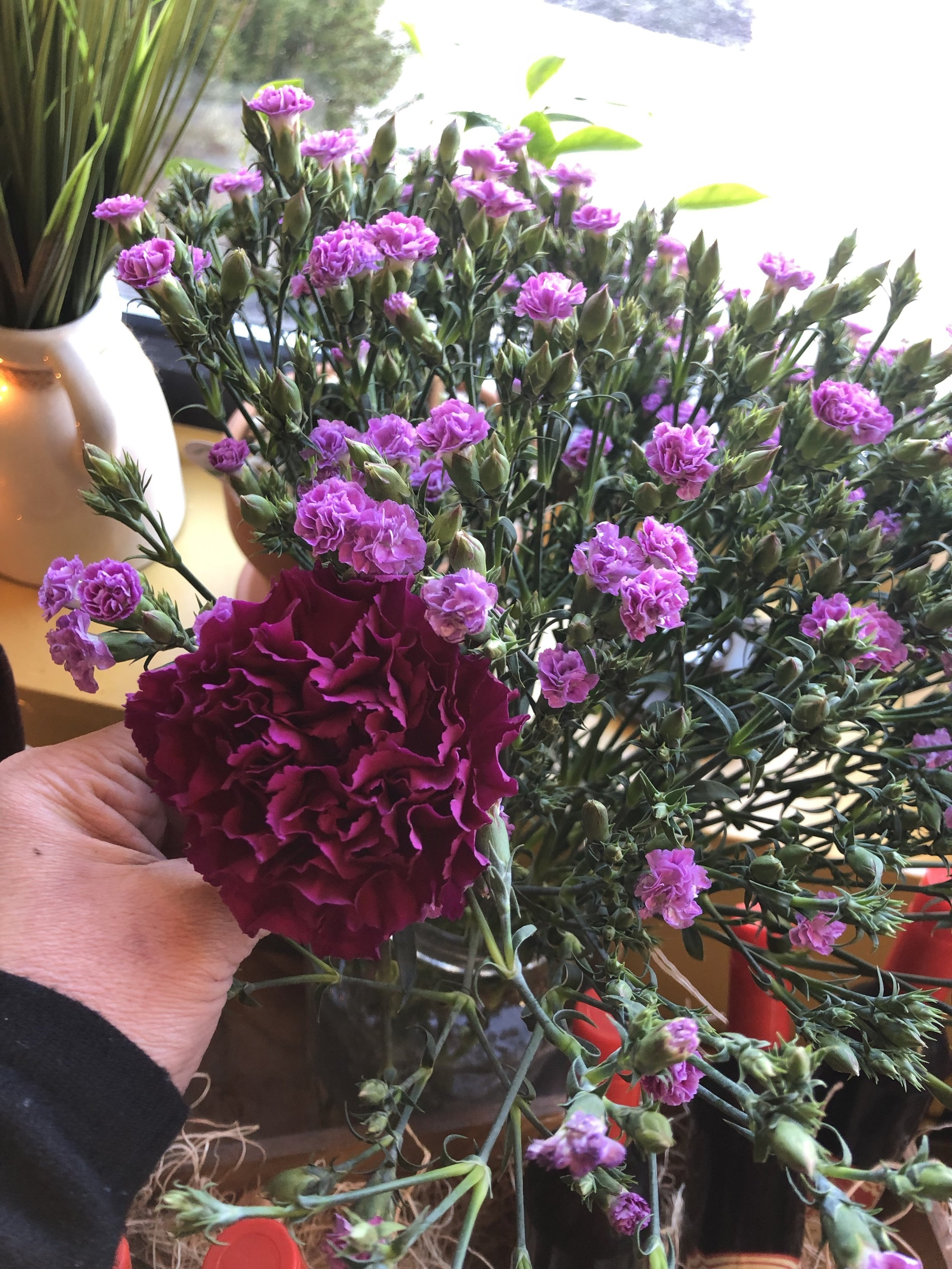 Regular Carnation for size