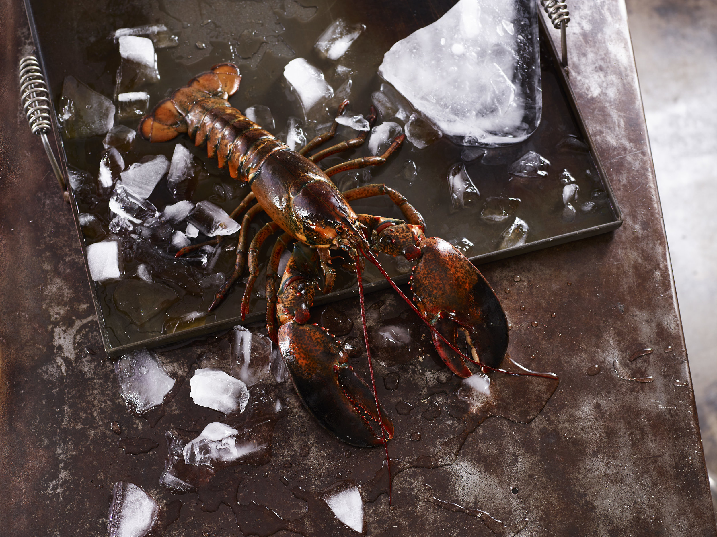 black lobsters.jpg