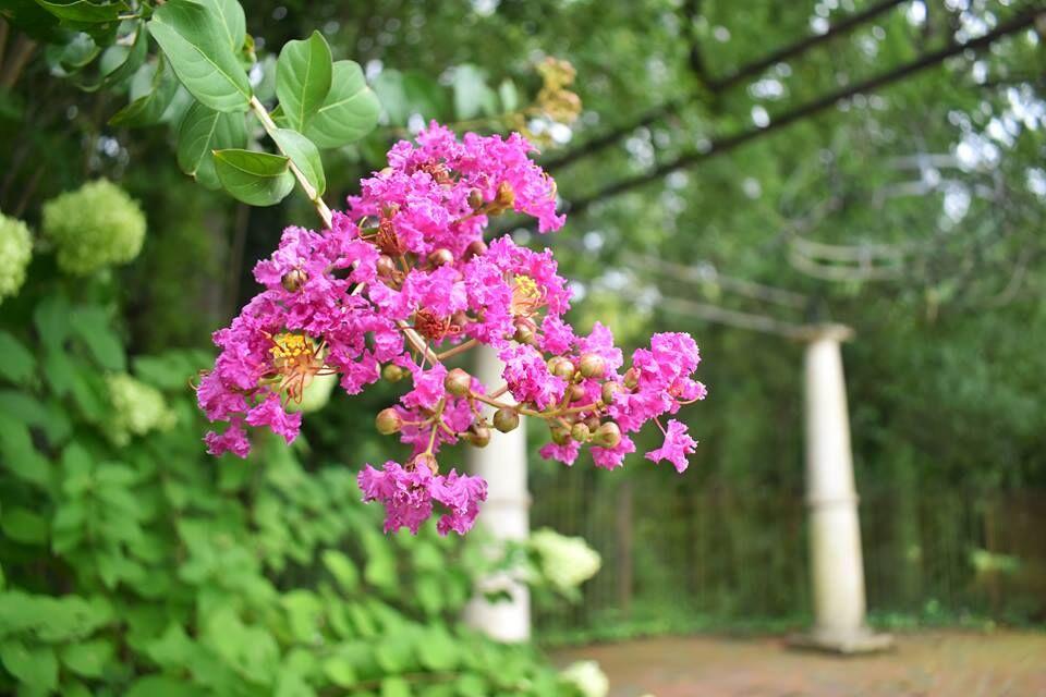 garden 2.jpeg