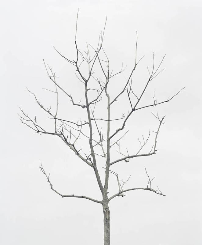 wave_tree_1.jpg