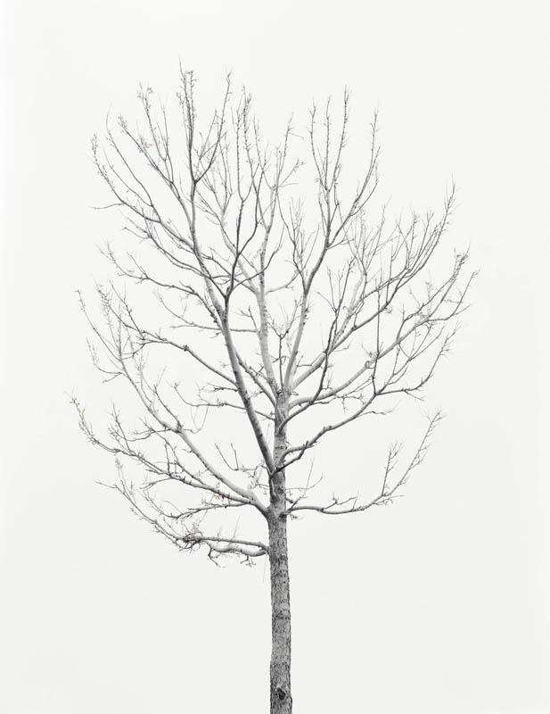 wave_tree_3.jpg