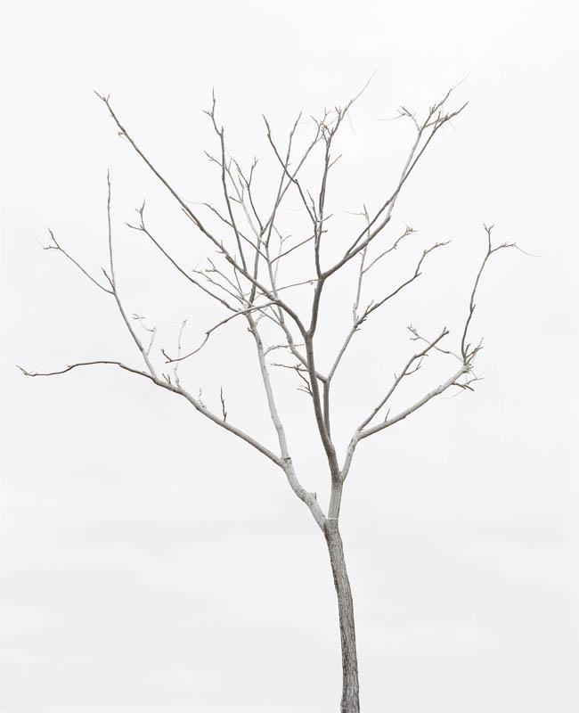 wavte_tree_2.jpg