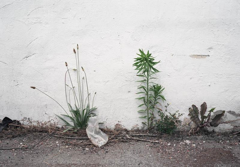 weed 6.jpg