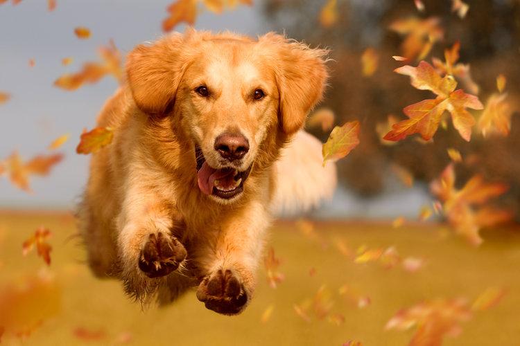Dog Running — Happy Dog