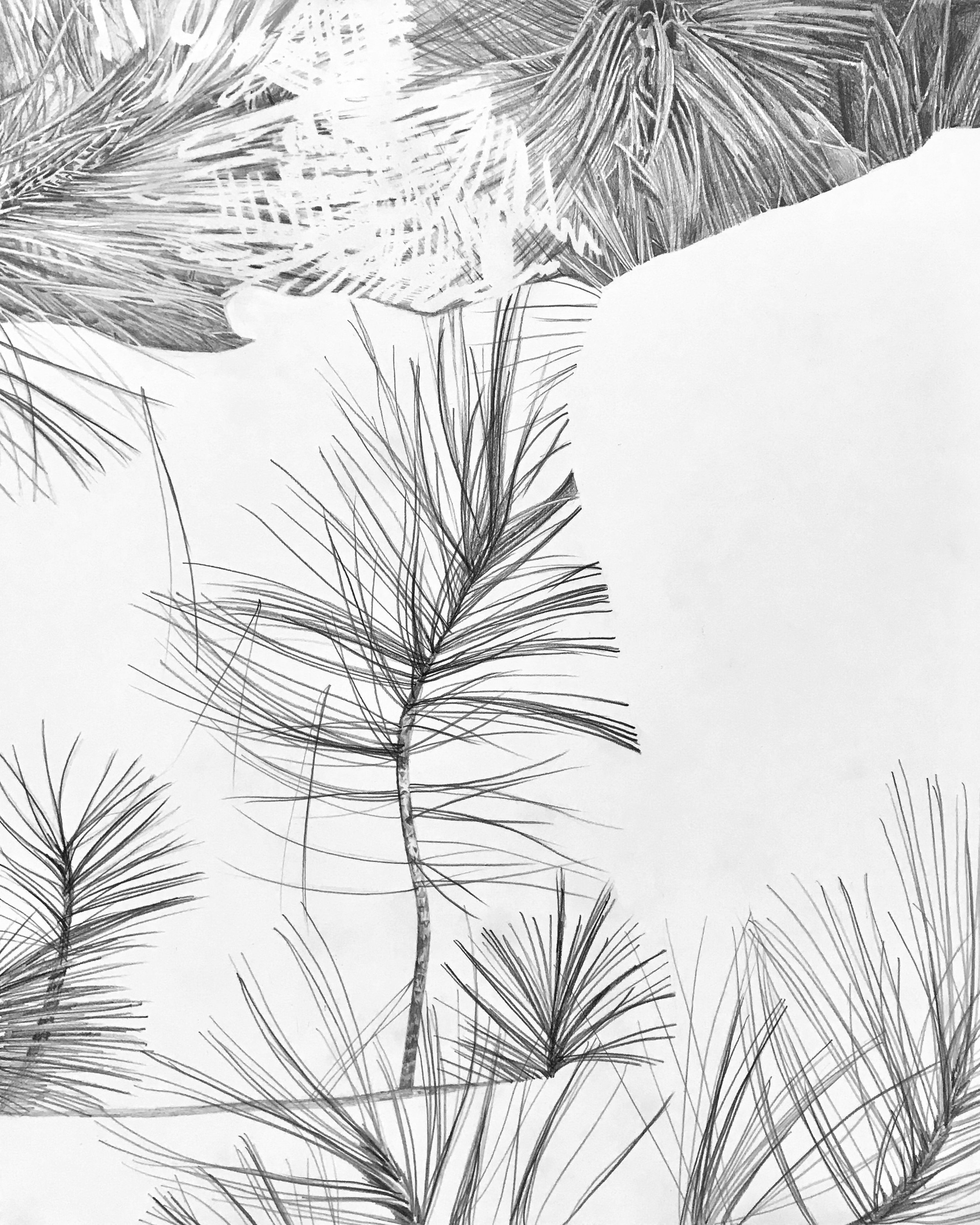 Drawing of 09.07.16 Tofte Lake (Fir)