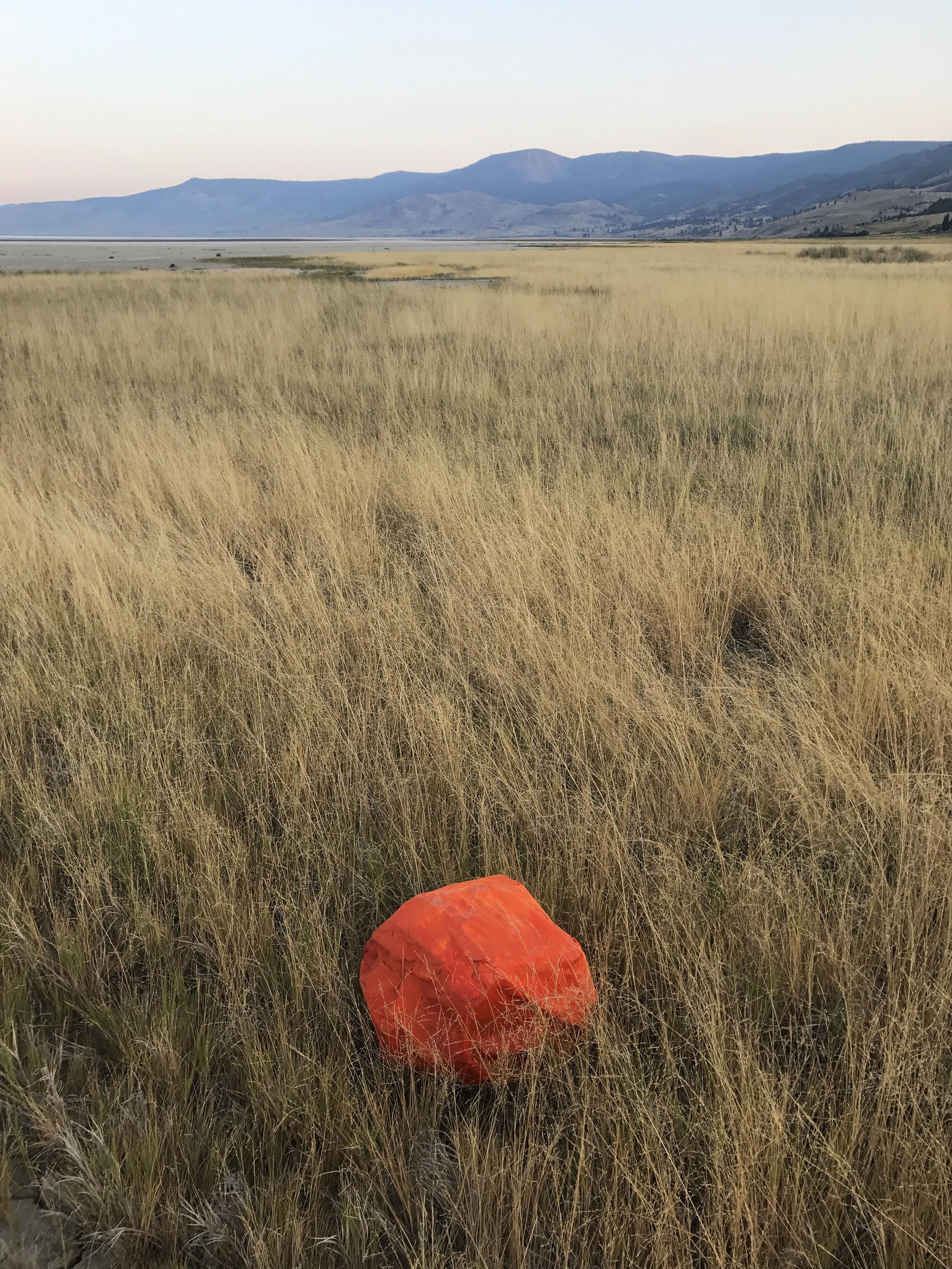 Rock Portrait (Orange in Grass)