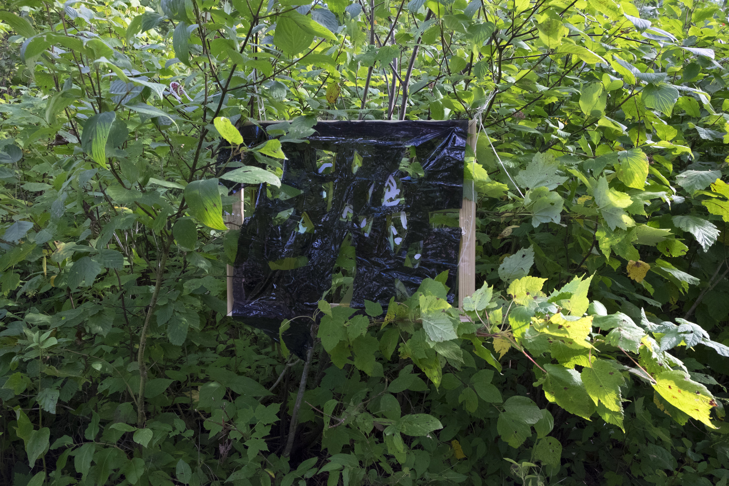 09.08.16 Reveal: Tofte Lake (Leaves)