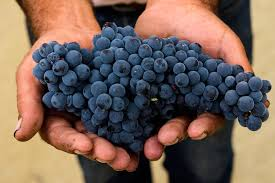 black grapes 2.jpg