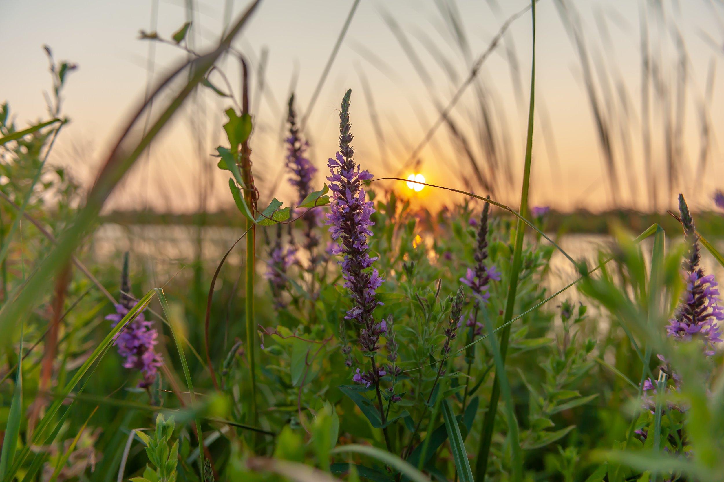 blooming-field-flora-1267284.jpg