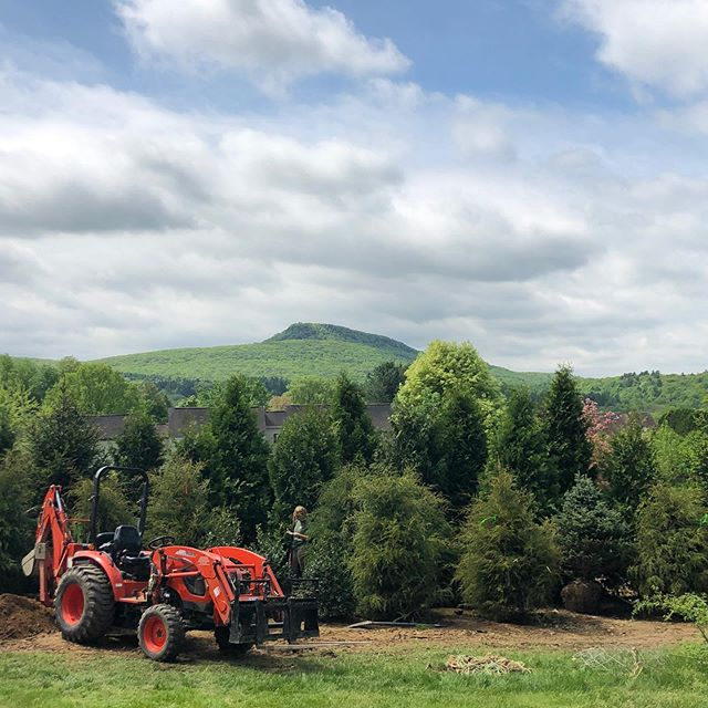 Nice day for a dense planting! Our clients are excited to see the Holyoke Range and not their neighbors...