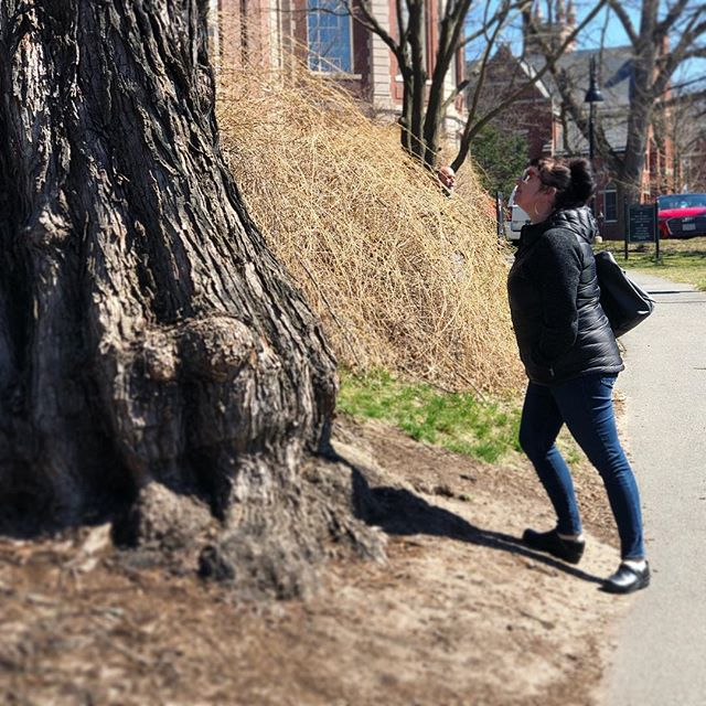 WOLA in the field! Site visit for an exciting new project with Coldham & Hartman Architects at @smithcollege near this gorgeous Jersey Elm!