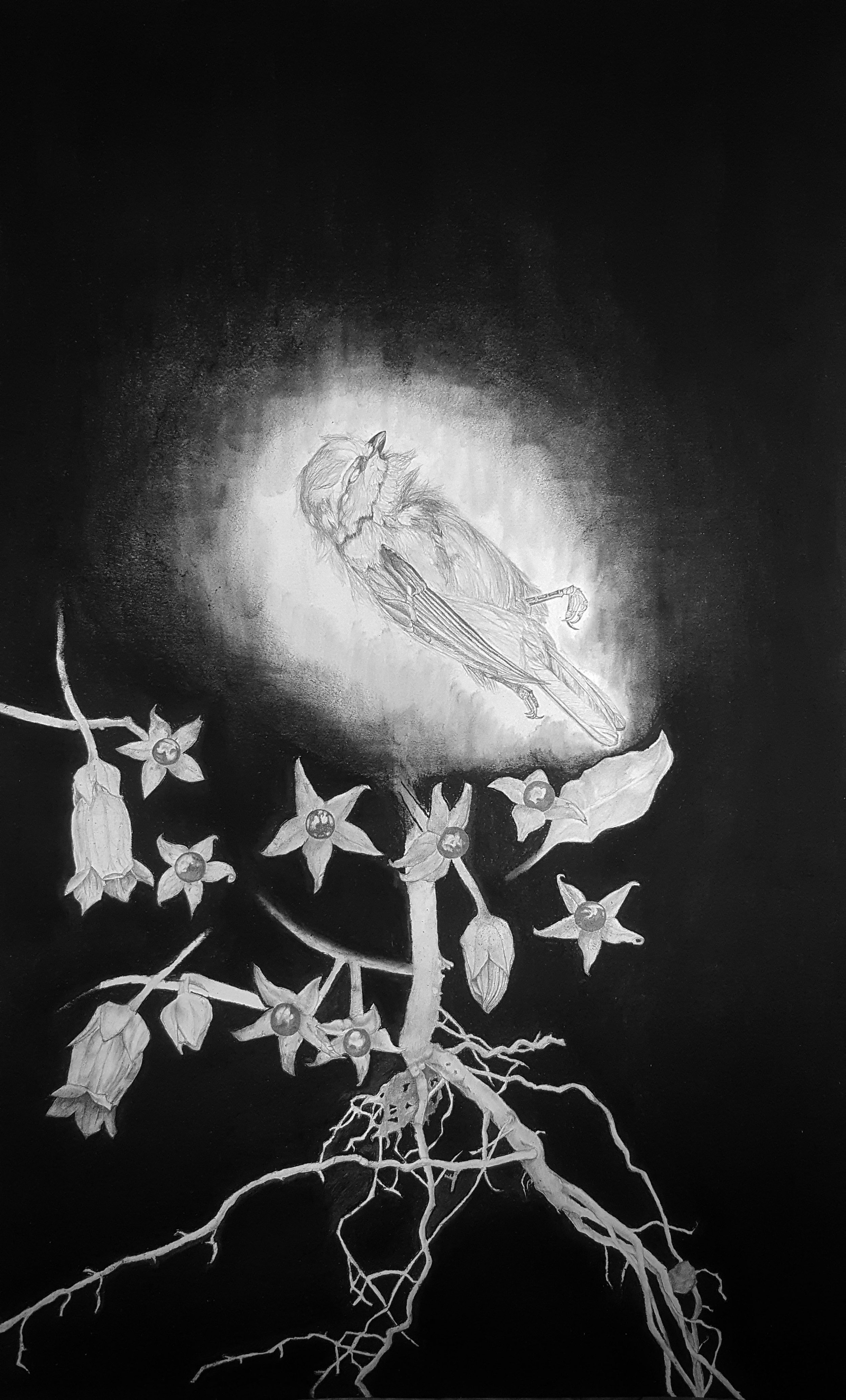 Belladonna, the Fallen