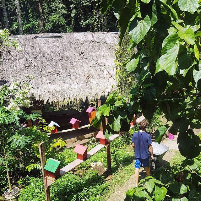 Be a volunteer in the middle of the jungel and enjoy the wildlife!  FOLLOW US and get the newest projects in Costa Rica. ☝️👀 . . . . . #volunteering #jungle #jonaabroad #jonavolunteer #wildlife #helptheworld #helpnature #sunnyday #beehives #beefarm #honeyfarm #dosomegood