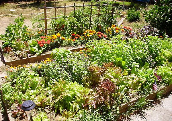 raised_garden_bed_600.jpg