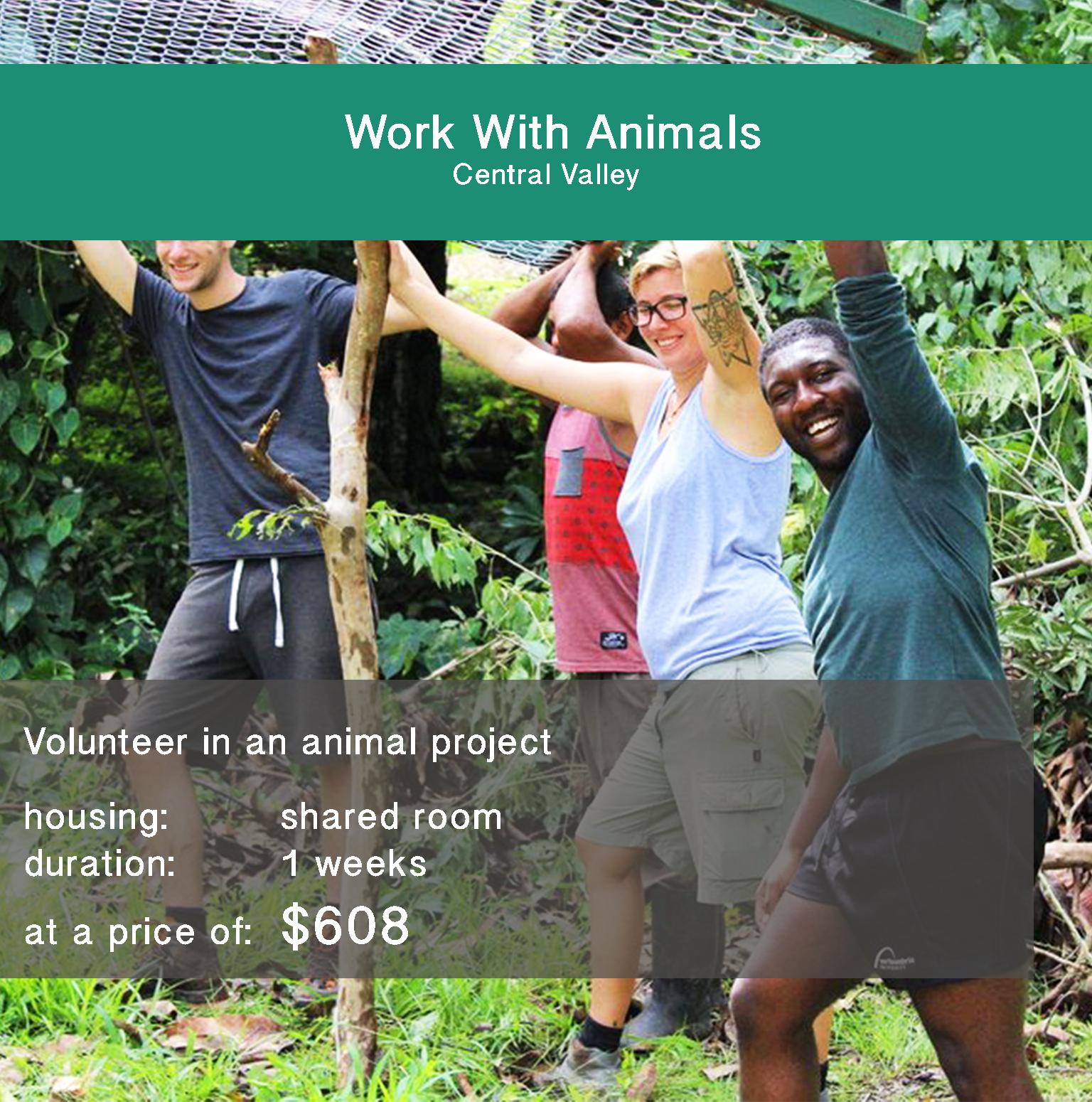 Animal-Rescue-Jona Abroad.jpg