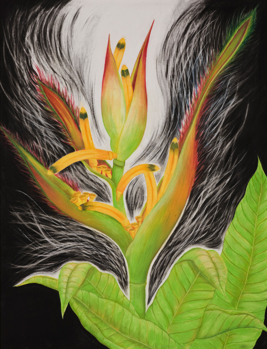 Sassy Heleconia II ( SOLD ) Pastels and charcoal on paper, 38 X 50 inches