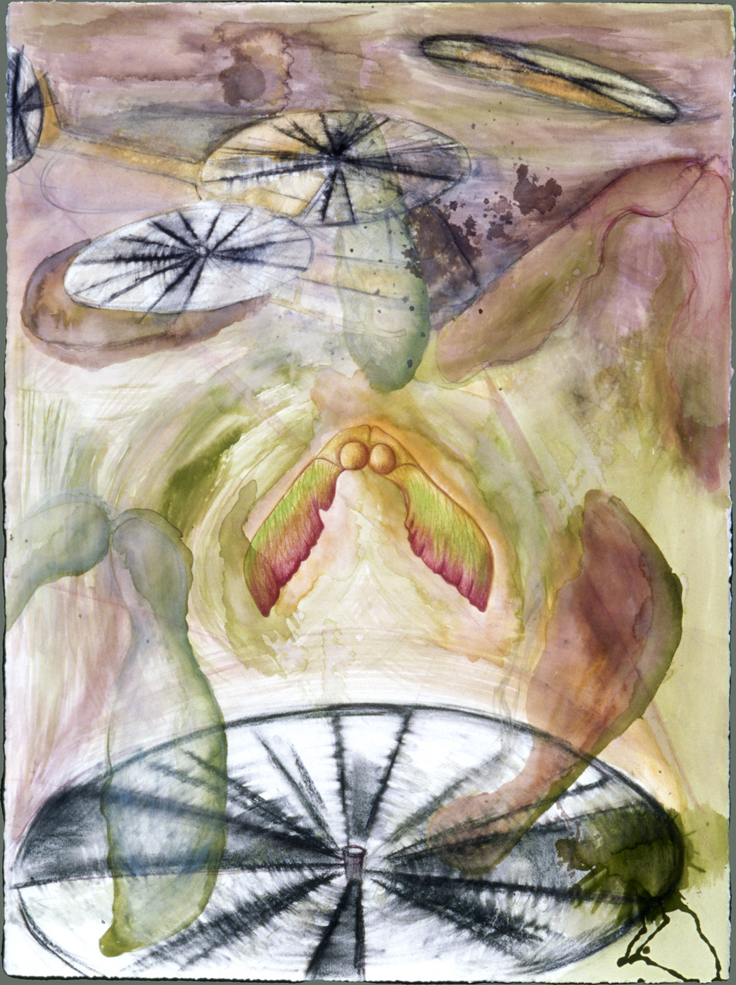 Helicoptor Seed Pods ( SOLD ) Watercolor, ink, and charcoal, 22 X 32 inches