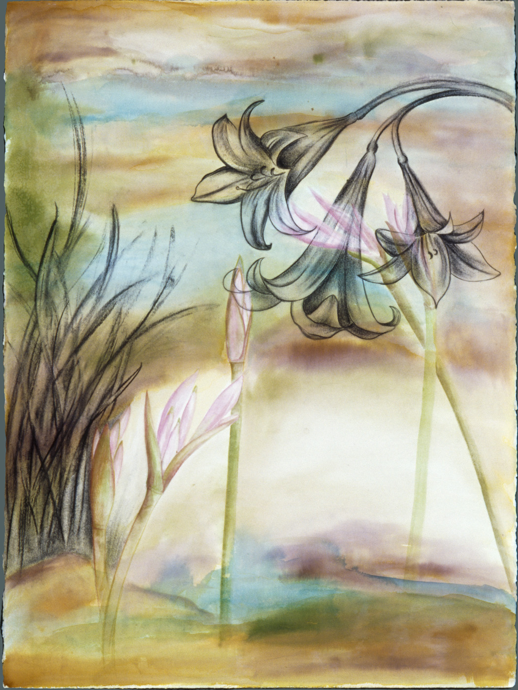 Amaryllis in the Weeds ( SOLD ) Watercolor, ink, and charcoal on paper, 22 X 32 inches