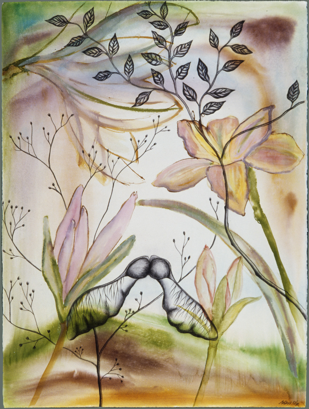 Lily and Maple Seed Pod Watercolor, ink, and charcoal on paper, 22 X 32 inches