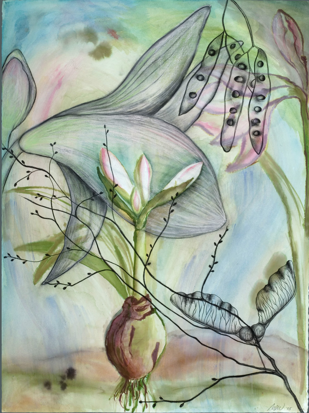 Amaryllis Bulb With Samaras Watercolor, ink, and charcoal on paper, 22 x 30 inches