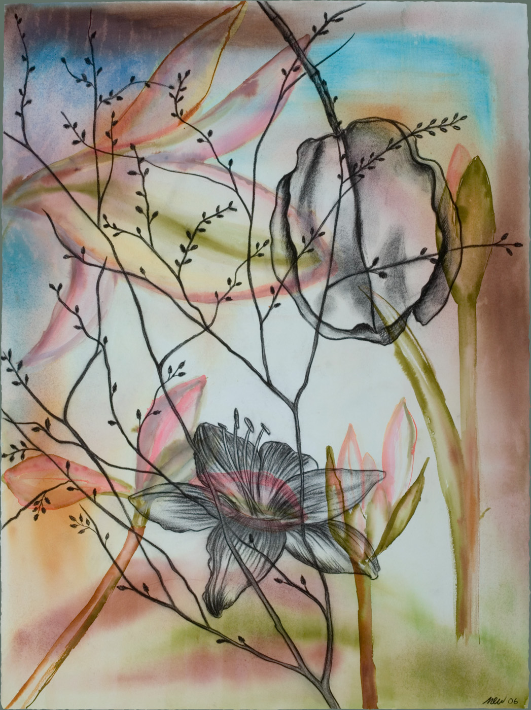 Flowers and Pod Watercolor, ink, and charcoal on paper, 22 x 30 inches