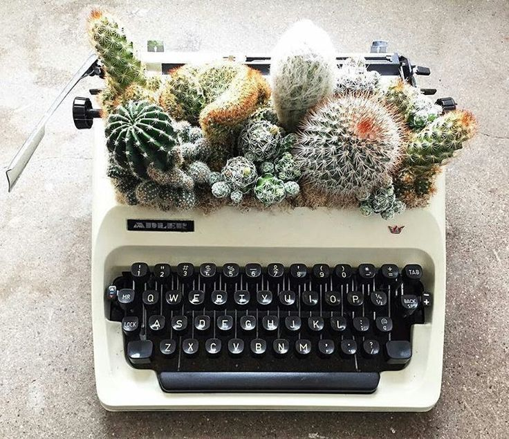 A display twist for bringing greenery indoors. Cacti in a typewriter..jpeg