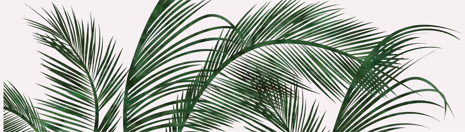 palms-01.png
