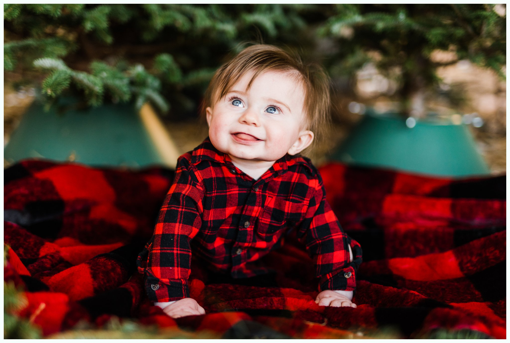 Christmas Tree Minis_3702.jpg