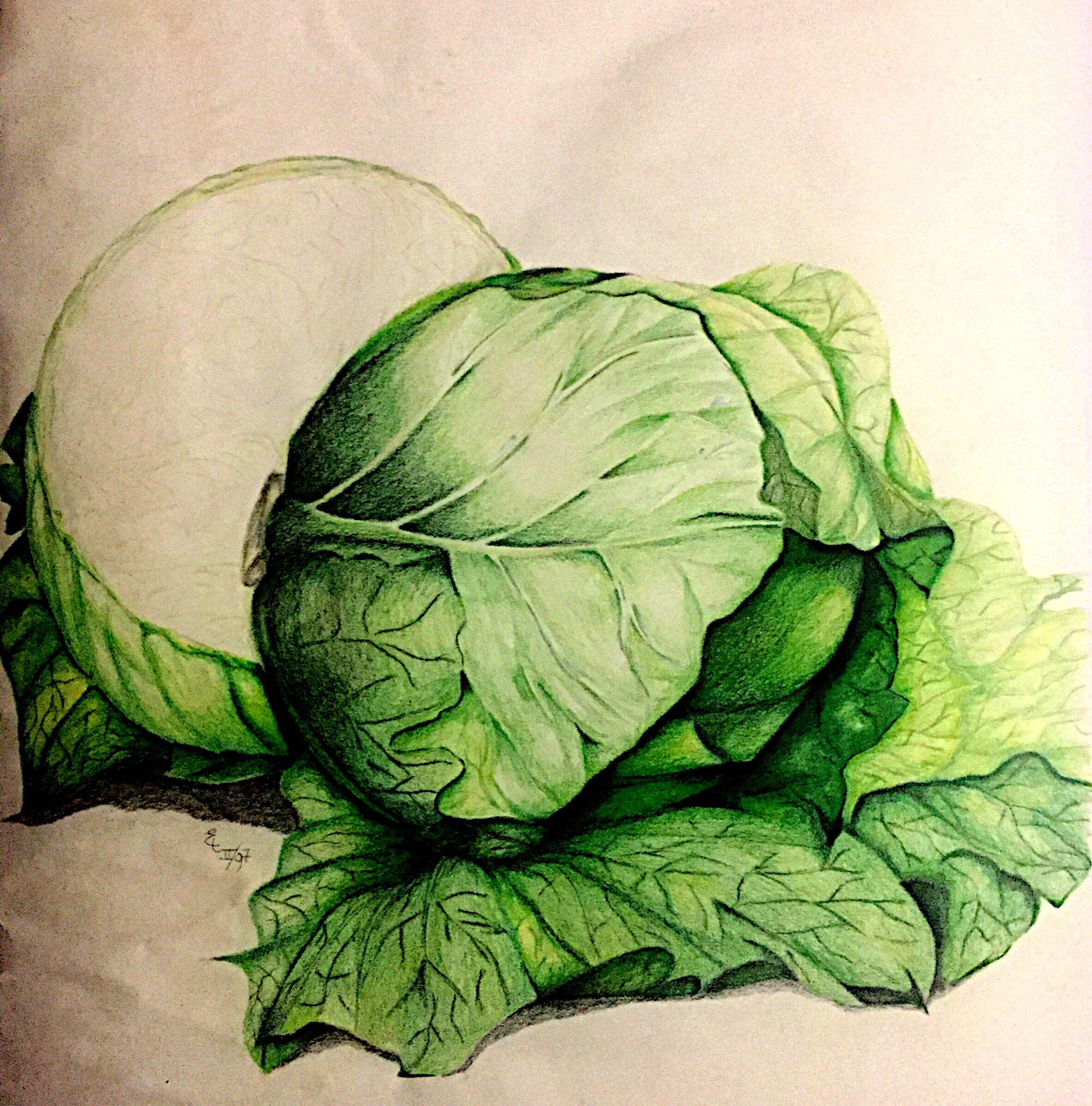 1997, Still Life Cabbage, colored pencil