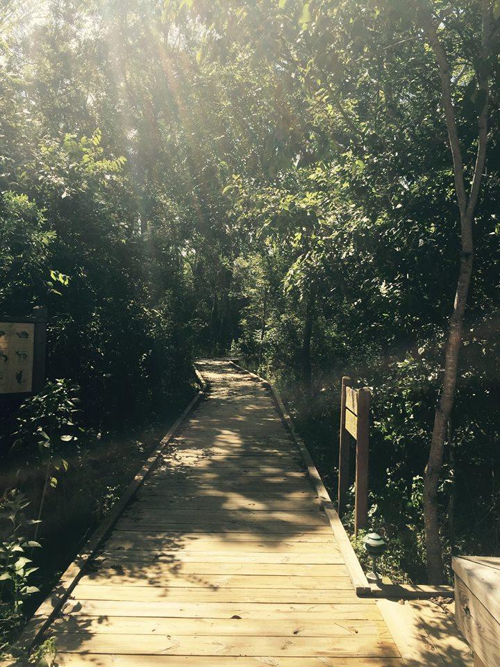 Boardwalk - Discovery Loop Boardwalk