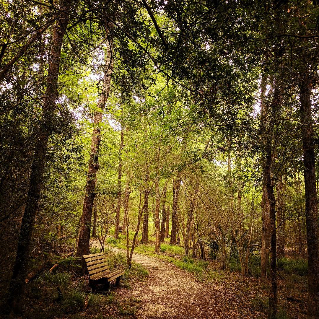 martyn trail.jpg